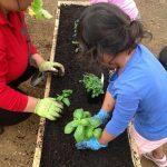 Bright Sparks Childcare Mangere gardening